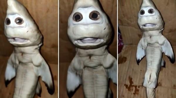 母鯊剖腹「撈出白色派大星」!高價收購漁民堅持不賣:牠是幸運物