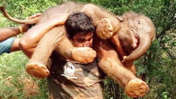 迷路小象受困水溝!熱心男扛牠跑50公尺找媽媽 事後才知牠超過100公斤