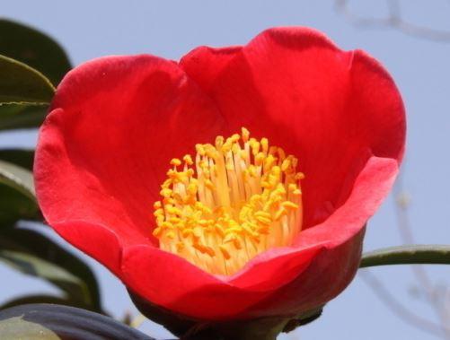 心理測試:挑一朵你喜歡的山茶花,測你的人緣是好還是壞!
