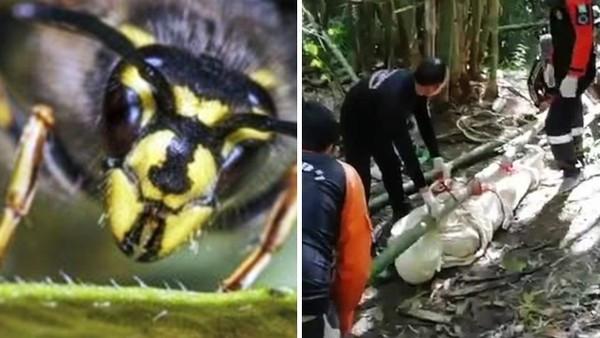 腐爛皮膚全是蟲卵!男導遊被黃蜂「螫成人肉蜂窩」 曝屍四天沒人敢救