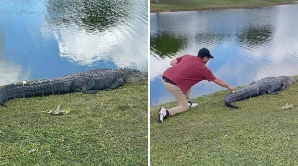 高爾夫球揮出「落在鱷魚身上」 男躡手躡腳接近 撿回瞬間牠竟驚恐轉身