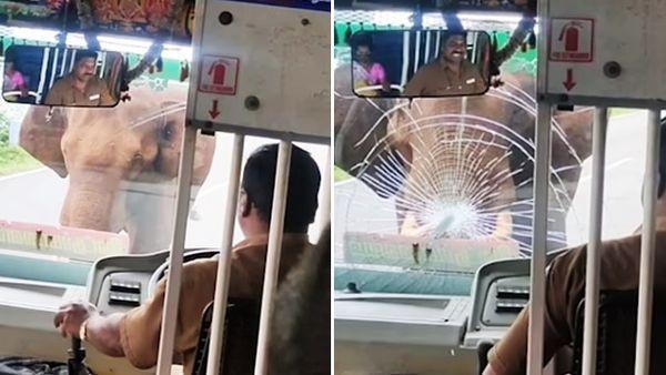 逆向還惱羞!大象+9用尖牙「刺爆擋風玻璃」司機無奈:我有倒車了啊