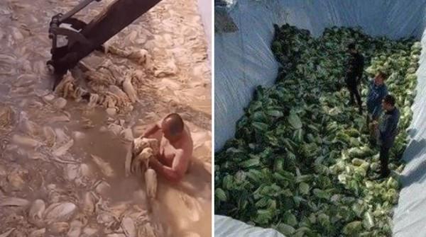 中國食品廠髒鞋踩醃菜!大叔員工「裸泳泡菜海」影像曝光 韓網噁吐拒吃
