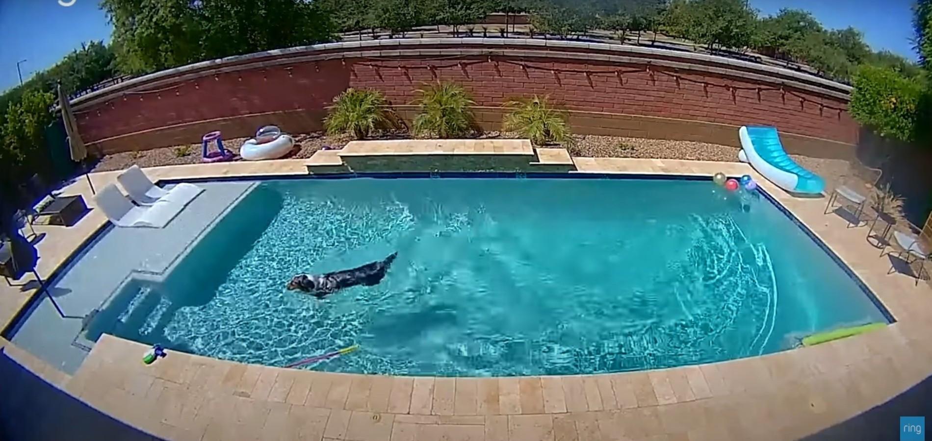 ▲▼寵物趁主人不在開泳池趴(圖/翻攝自YouTube/Ring)