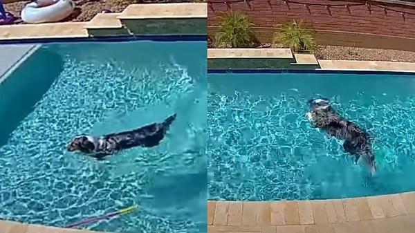 毛孩看家玩超嗨!愛犬獨佔露天泳池「花式跳水無限次」主人開監視器看傻眼