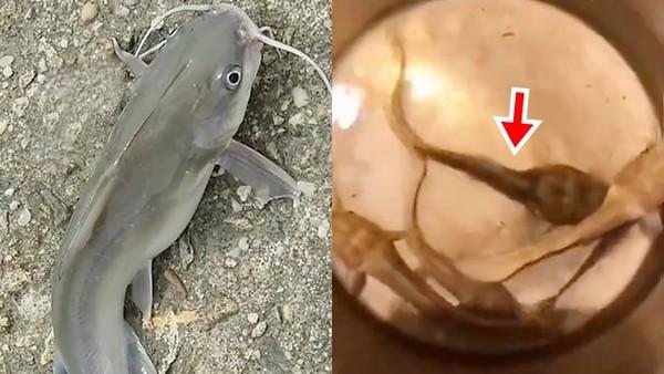 鯰魚「瘦到剩一顆頭」還沒死!養殖池廢棄一年沒人餵 頑強生命嚇壞漁民