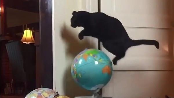 喵之跳躍太厲害!咻繞過半顆地球 飼主苦想障礙物:牠整天都在這瞎忙