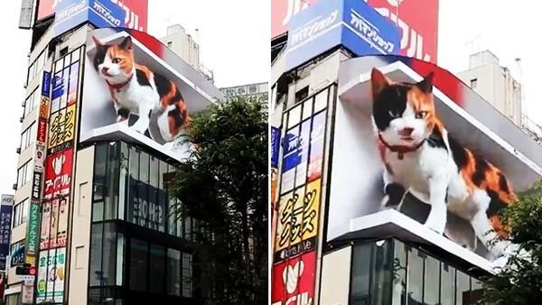 路口有隻巨大喵!東京街頭驚見「體長20公尺三花貓」立體投影太逼真路人驚呼