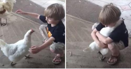 友情太可愛! 母雞每天「找男孩討抱抱」 他換髮型「母雞愣2秒」:確認是本人才給抱♥