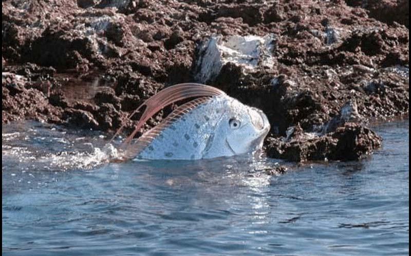 被人類稱為恐怖傳說!台灣海灘上出現「超罕見海龍王」一撈起震驚大批遊客!