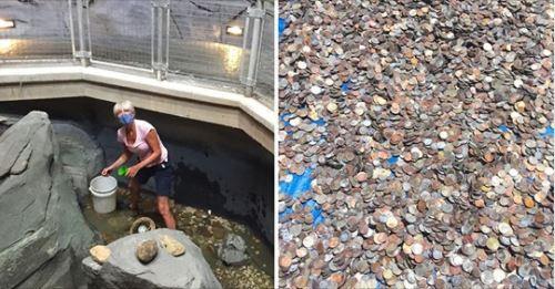 封鎖沒生意!水族館奇想「鏟光許願池」救急 撈「400kg硬幣海」傻眼:飼料費有著落了…