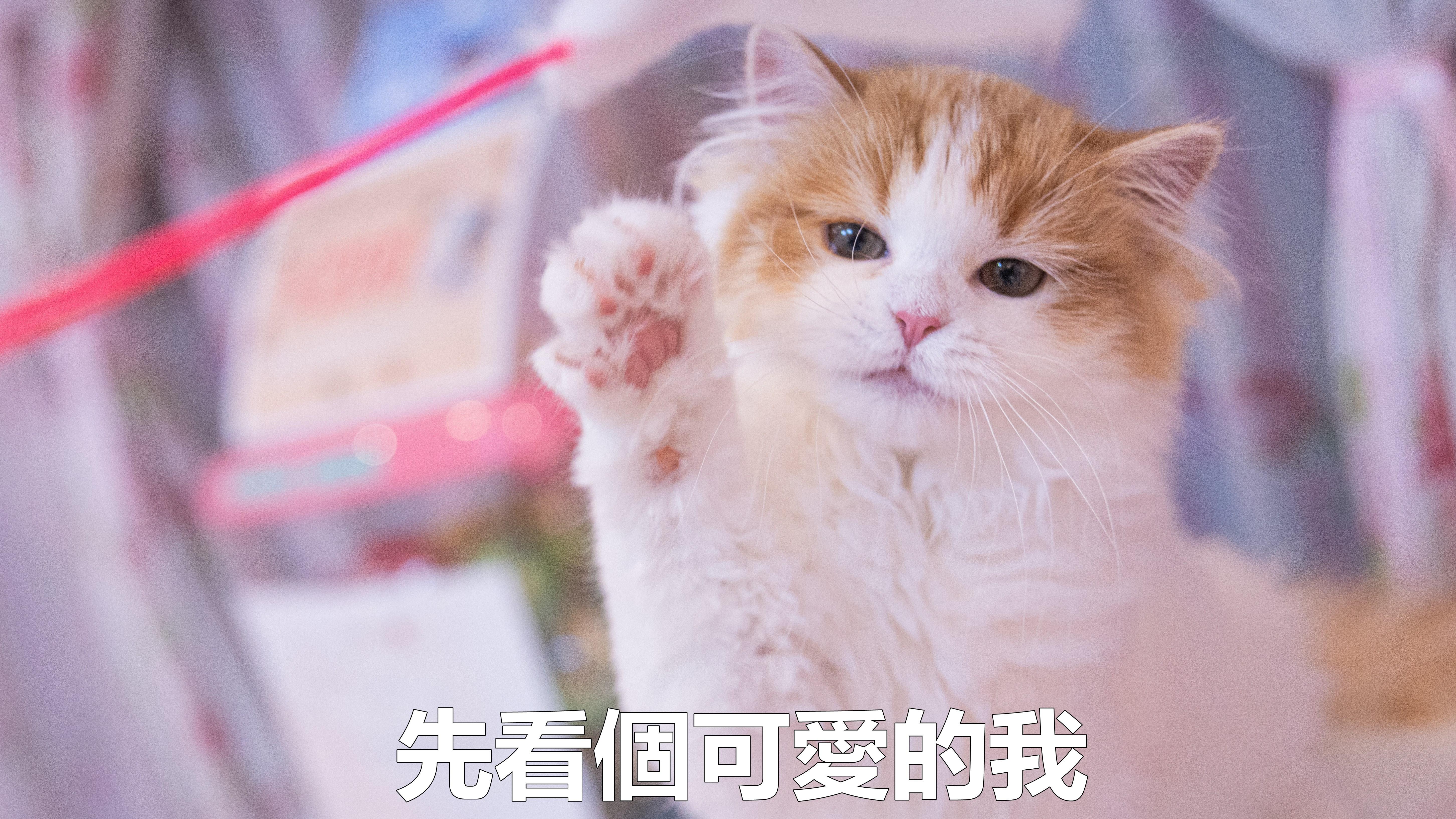 ▲▼貓(圖/取自免費圖庫pakutaso)