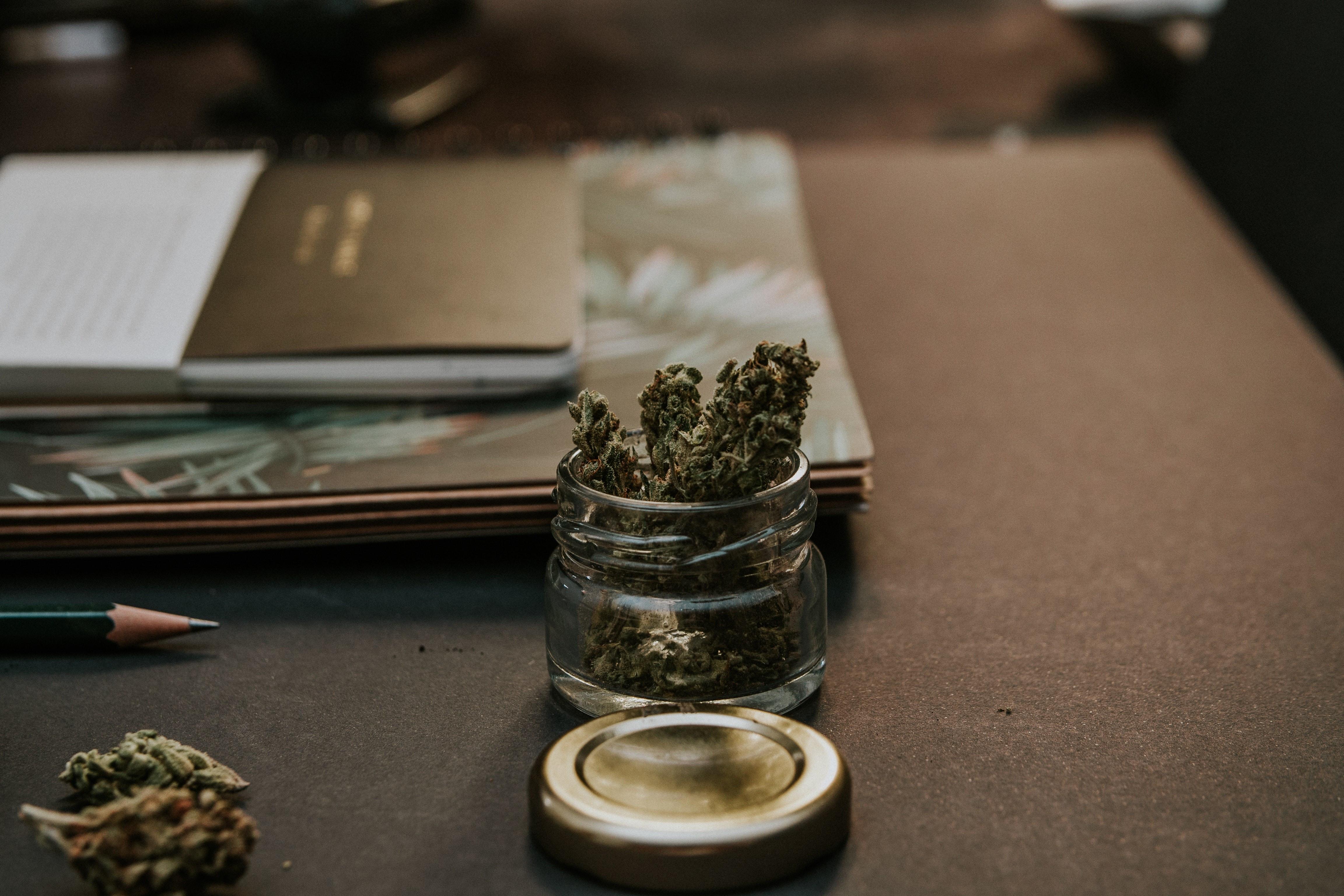 ▲大麻。(圖/阿雜提供)