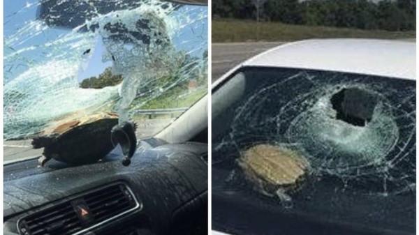 見龜頭飛來!高速公路開車「阿龜衝入爆頭」 71歲阿嬤送醫:以為恐怖攻擊
