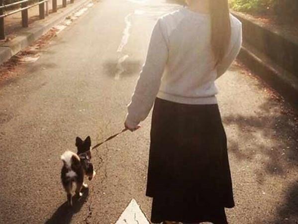 17種狗狗狀況解夢,夢到一起散步竟然是凶兆!