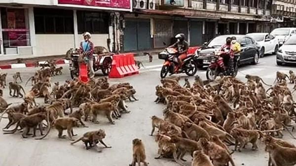 「兩大野猴幫派」街頭火拼!猴老大撂兄弟搶地盤 旁觀駕駛嚇壞不敢介入