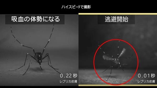 抹油「讓蚊子站不穩」是最強防蚊方法!花王最新實驗,成功讓蚊子滑倒了
