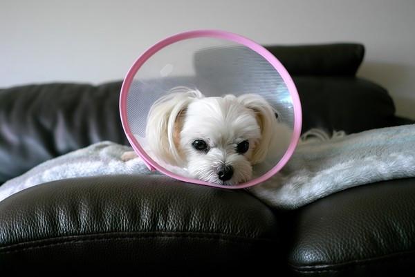 幼犬才剛帶回家!隔天一早狗狗「全身癱軟、抽搐」 背後真相惹人淚