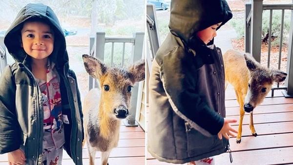 野生小鹿「信任4歲男童」一路跟回家!母開門傻眼叫來爸爸:兒子交了新朋友