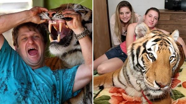 全家把老虎當貓養!富翁買下馬戲團受虐老虎:我可以給牠們更好的
