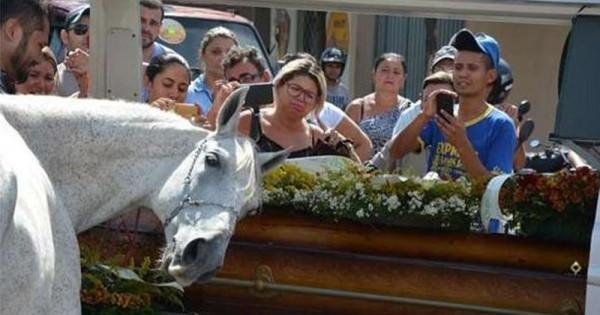 馬兒與最好的朋友道別,在喪禮上做出讓所有人都感動淚流的舉動!