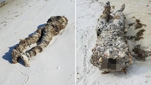 海邊出現兩隻腳嚇死人!以為是斷頭屍急報警 淨灘志工大膽一摸拳頭硬了