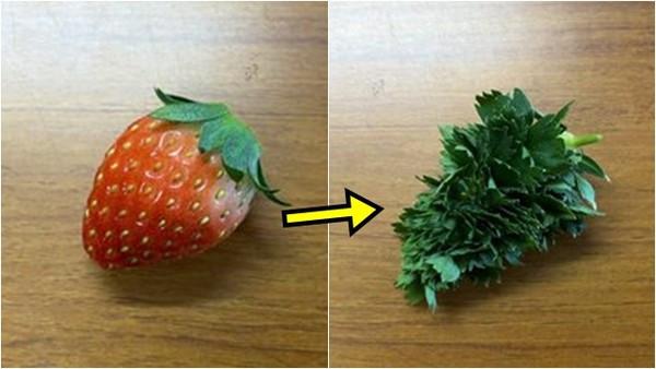 買回草莓「變成雜草一坨」!揭密「長成惡魔果實」全紀錄 放久還會變浪漫長髮?