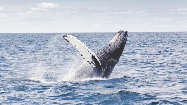 漁夫出海「慘被深海生物吞肚」 他敲牙齒被吐出來得救:我很難吃嗎
