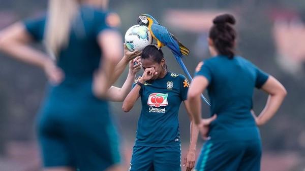 「頭上有鸚鵡」足球賽被迫暫停!球員無奈摀臉:牠來監督練習啦