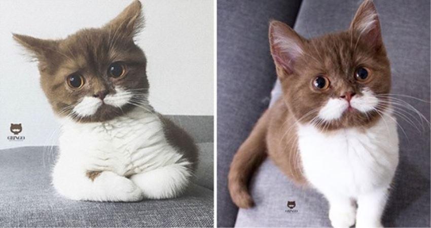 「白鬍子」貓咪變身傲嬌紳士 戴上領結升級成「英倫風」帥翻啦