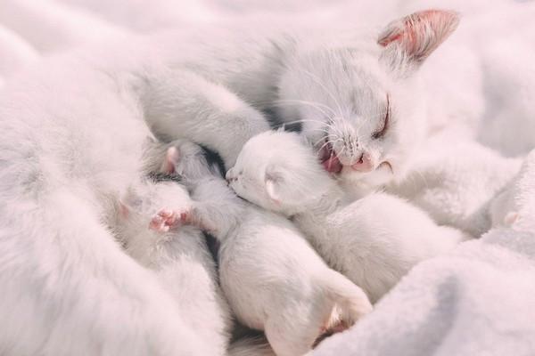 隔離40天返家發現...毛孩獨自生下4隻小貓 還清空魚缸「坐月子」