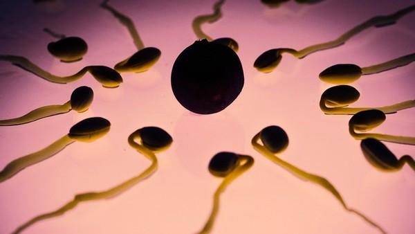 精液含「神秘物質」可預防癡呆!科學家讓果蠅吃精,發現牠的腦力明顯提升