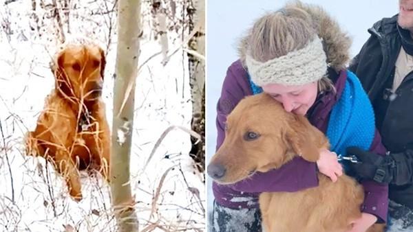家犬與浪犬對視三秒「驚覺對方是走失的」!牠在雪地狂吠 順利找回飼主