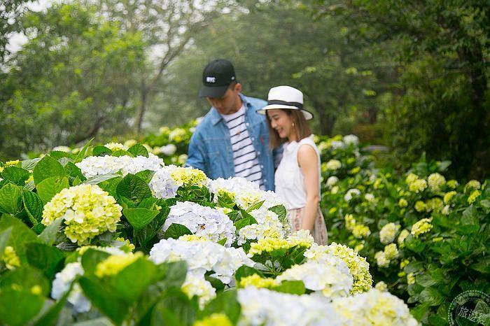 知本老爺邀您賞花遊 不僅遊「金針花」還有繽紛繡球花海