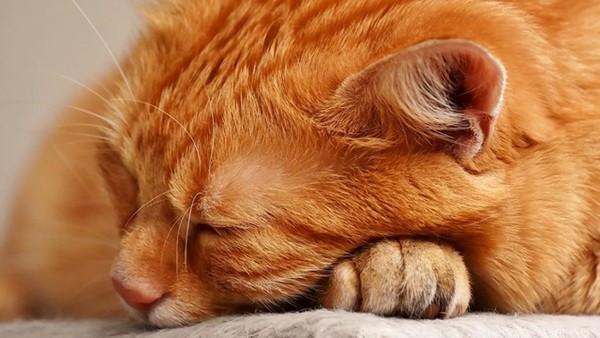 後肢癱瘓又有貓愛滋!不信人浪貓手術完「不願吃飯」 見人就出爪